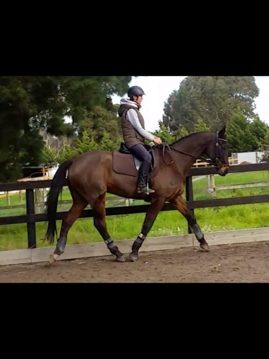 Gorgeous Thoroughbred Gelding