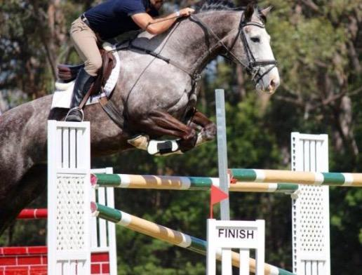 Competitive Bold Show Jump  Irish Sport Mare