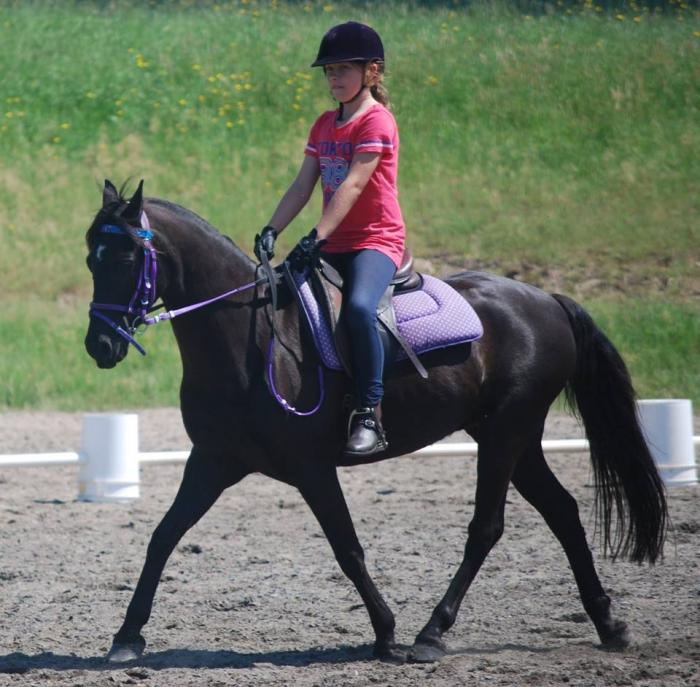 Corvan Park Main Edition PERFECT KIDS PONY