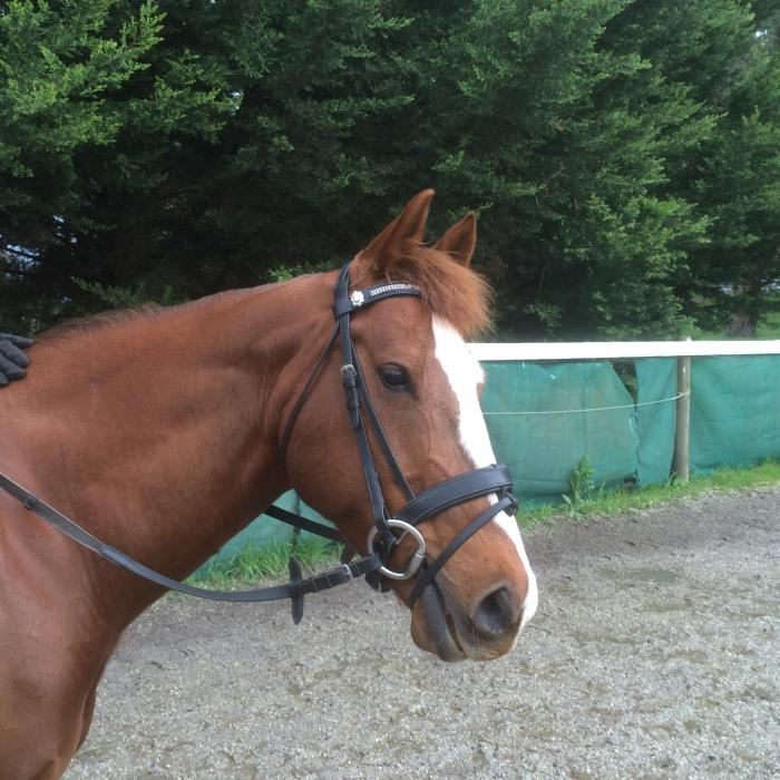 Trailing Riding Pleasure QH
