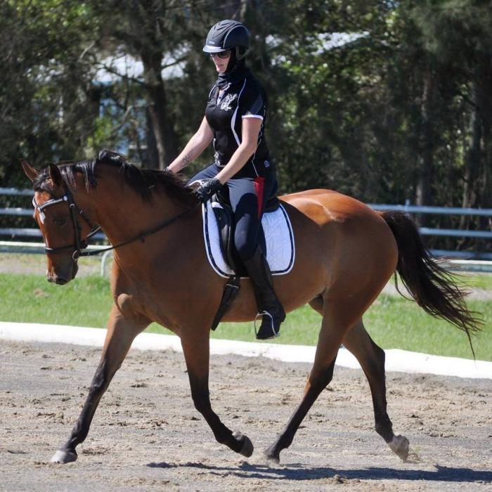 Elementary Trained 7yr QH Mare