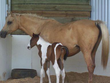 2012 foal