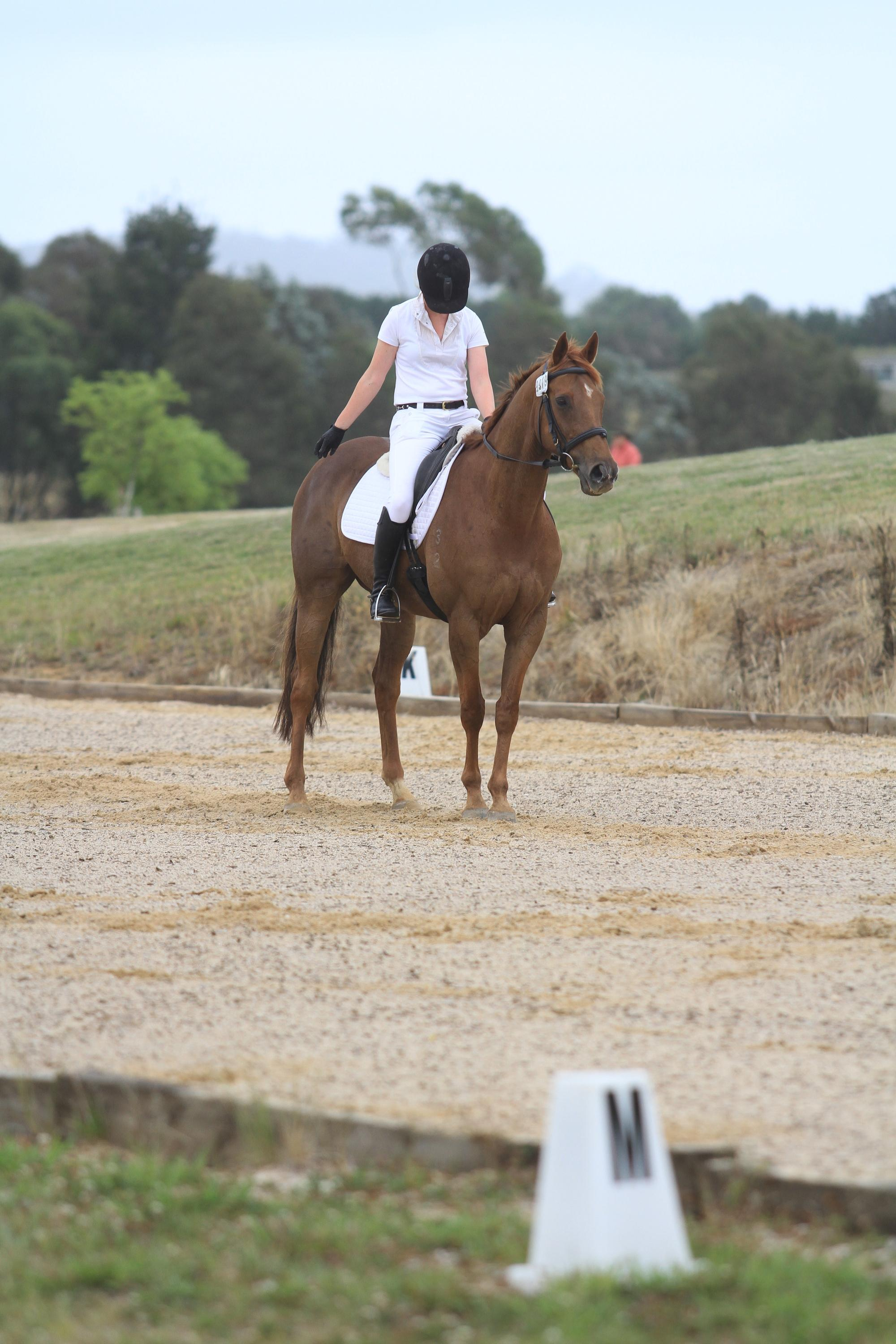Lovely and Educated Gelding For Sale
