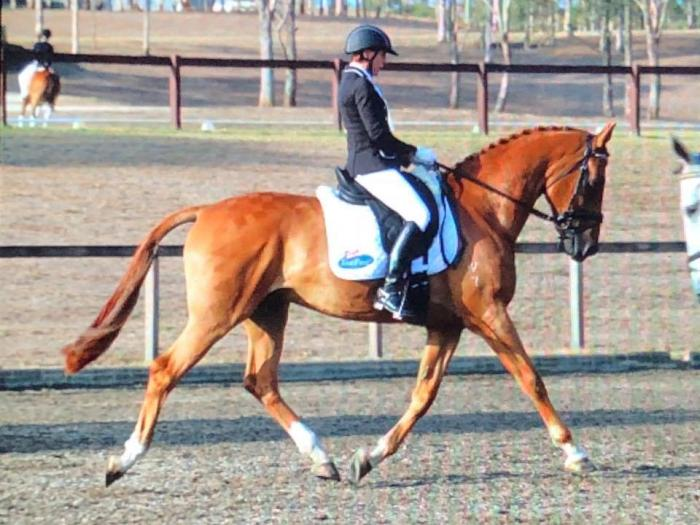 Quality WB Gelding for Multiple Disciplines