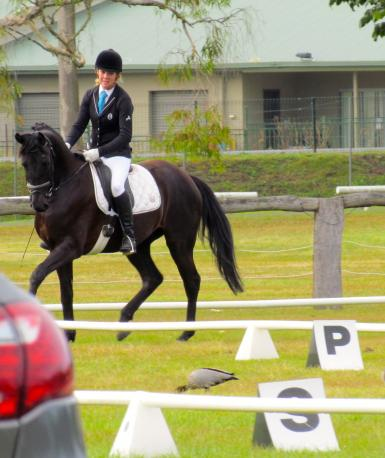 Lloyd's 1st Dressage Competition, so calm, 1st time in a competition Arena!!