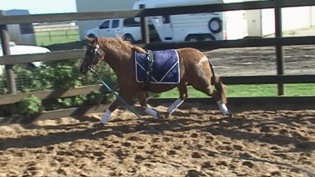 Super Quiet Young Riding Pony Mare