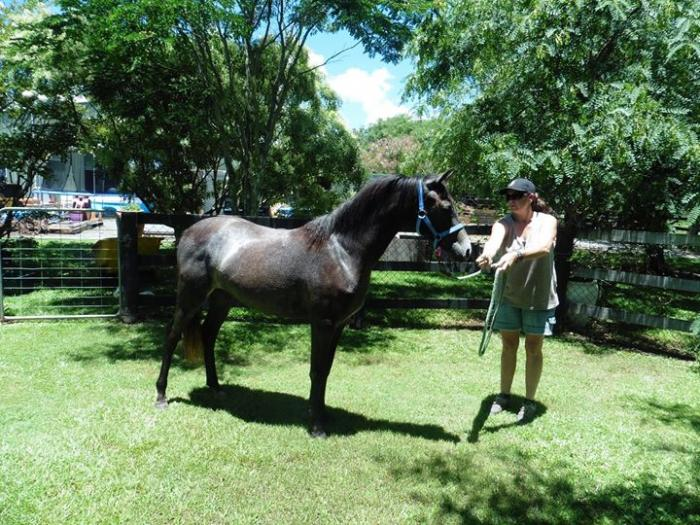 beautiful riding pony filly PRICE REDUCED TO SELL