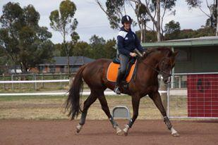 'SP Catching Fire' - 4yo, 16.1hh, unraced TB mare