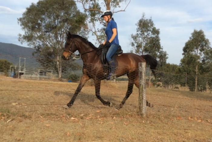 15.2hh TB Mare Trail/Show/Endurance/All-Rounder