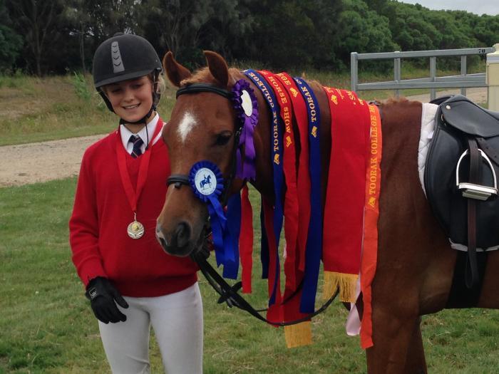 Talented allrounder pony,13.1hh,9 yr old,Arab x W
