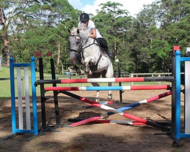 Super competitive show jumping horse!