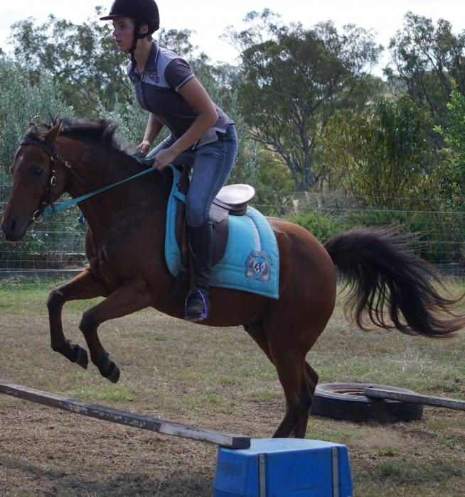 Trojan - Great allrounder pony!