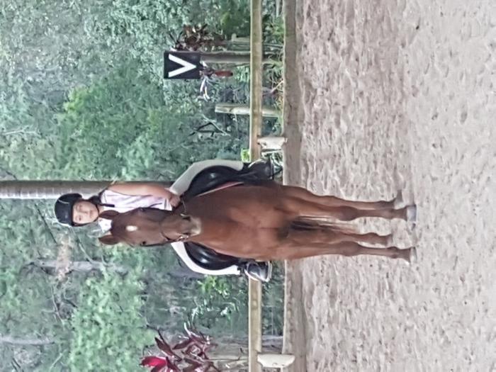 Austalian Pony