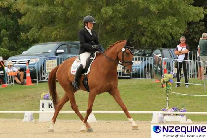 turns heads versitile and proven dressage champion