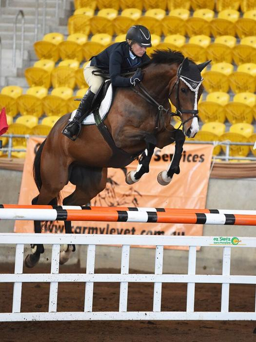 Showjumping Gelding 16hh, 10 yrs 1.20 to 1.30m