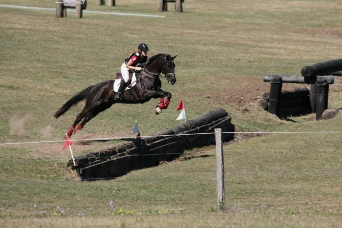 Perfect Eventing Allrounder