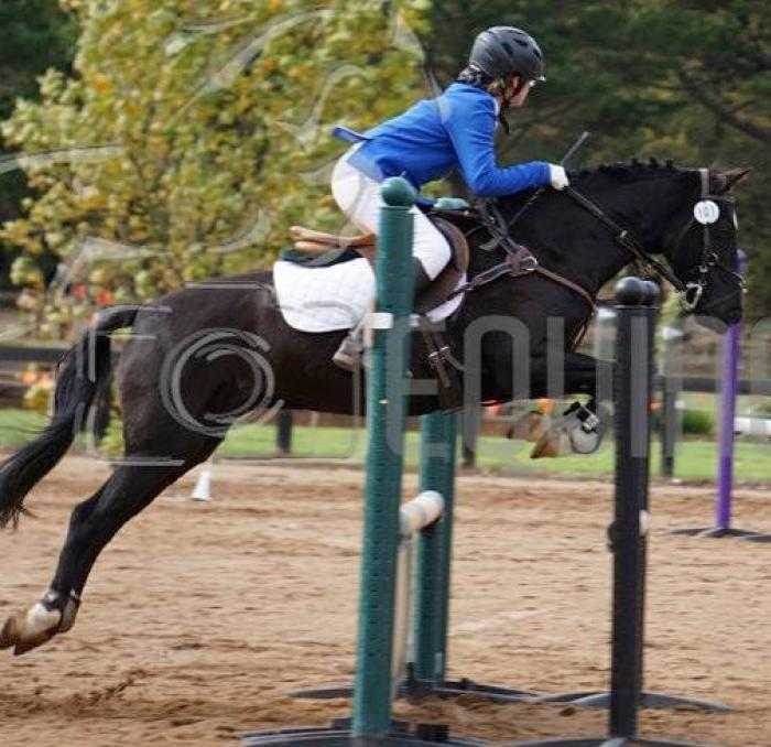 Talented  Showjumper,  Eventer and PC mount