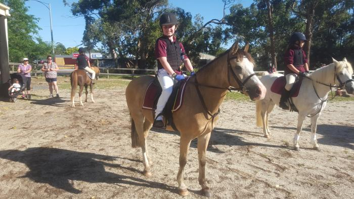 Welsh Section B Buckskin Gelding