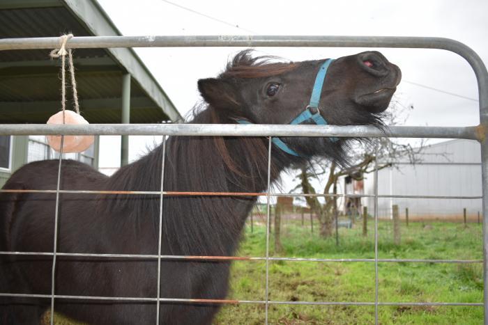 9hh Childs Pony