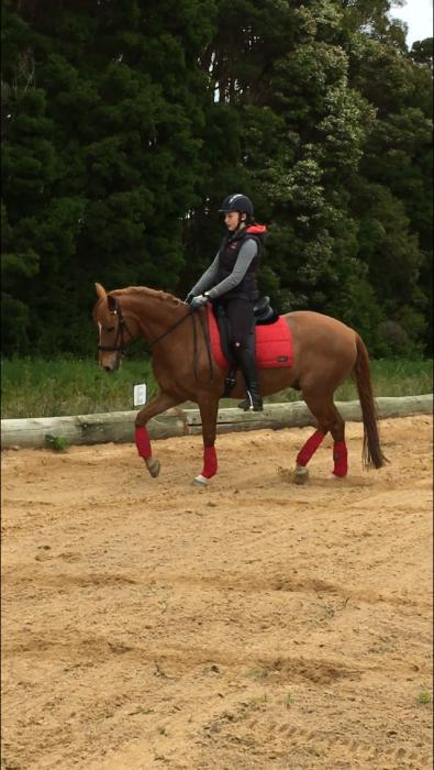 AEBC Trained 14.2 Chestnut Gelding with bling