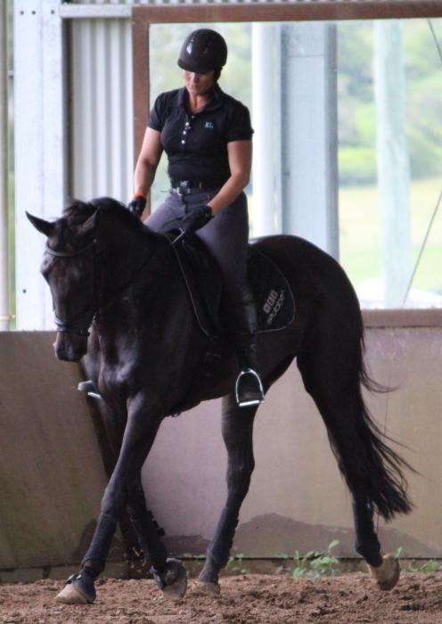 Stunning 16.2hh Black/brown mare