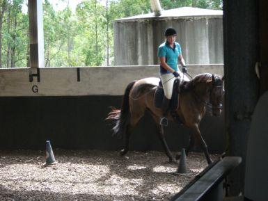 Equine studies '10