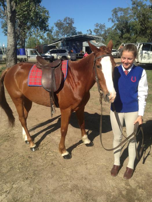 Sporting Chestnut TB/ASH Gelding