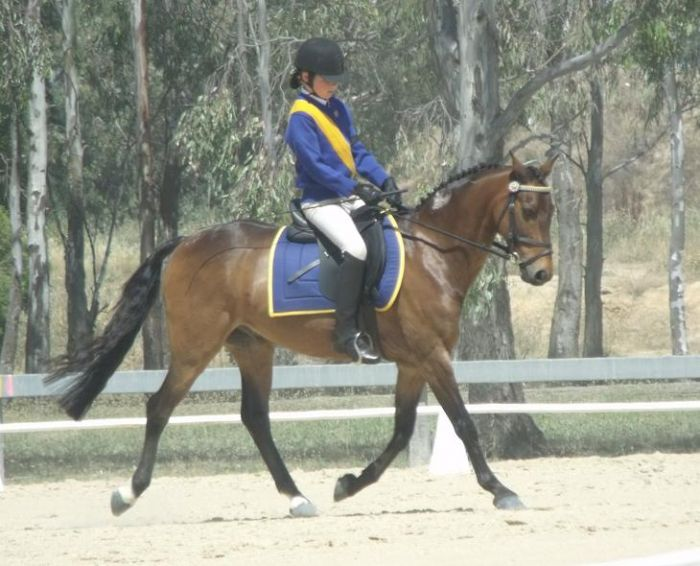 Oustanding Competitive Pony in all Disciplines