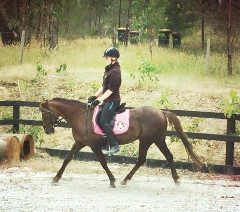 equineadvocate's listings - Horsezone.com.au - photo#20