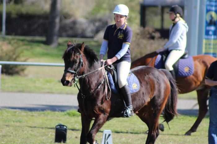 Sweet Pony Club Mount for an intermediate rider