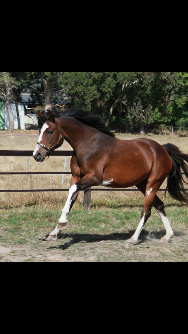 Exceptional mare
