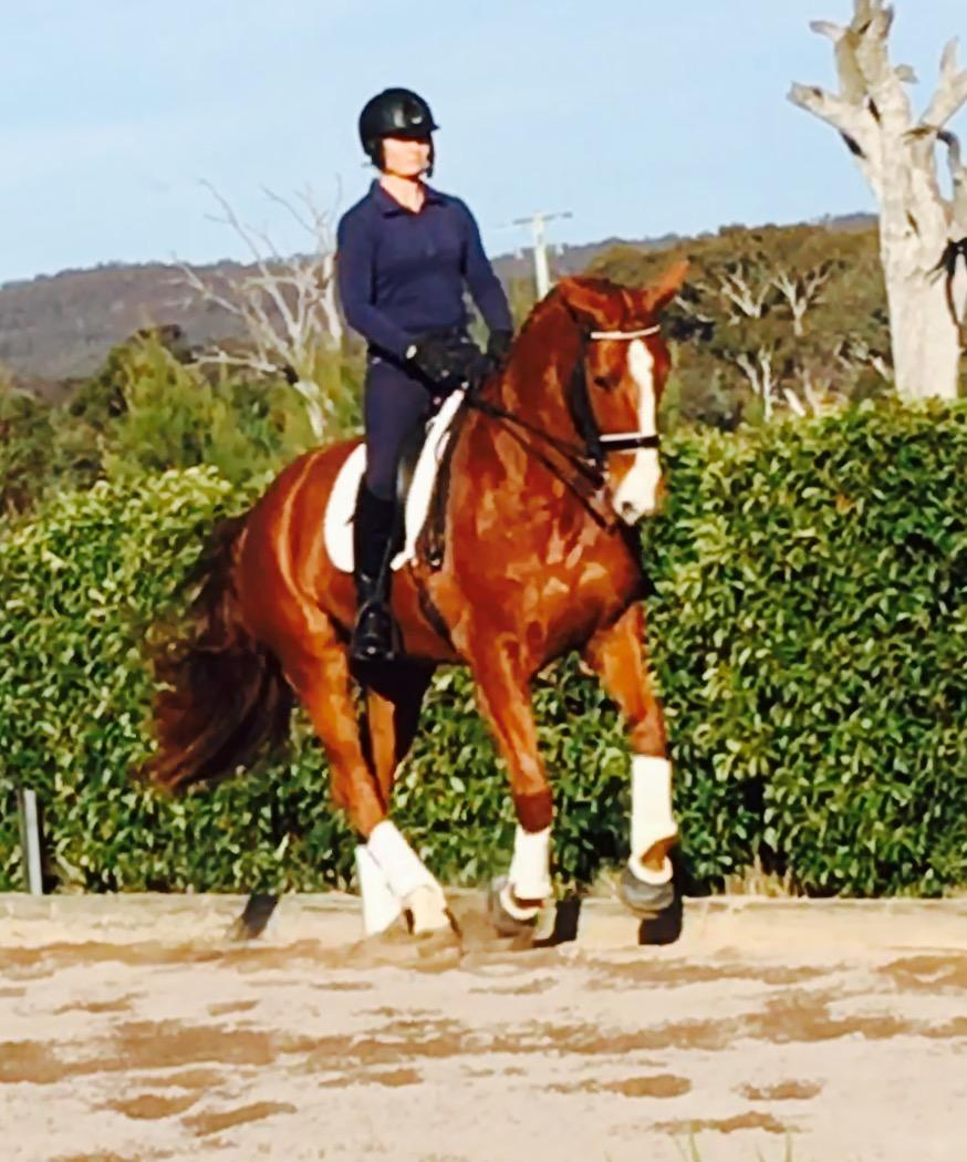 FEI Dressage  - Perfect YR or Amateur Prospect