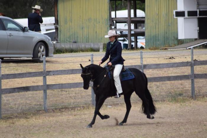Competitive Stock Horse Mare