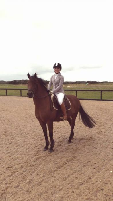 Flashy New Forest Gelding