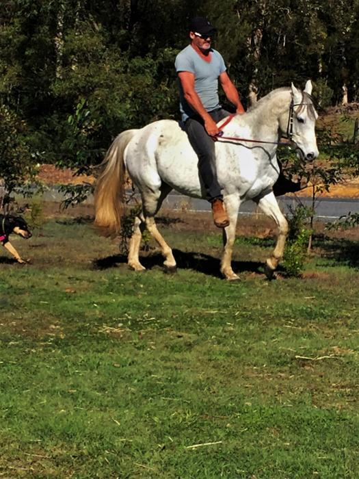 sporting gelding