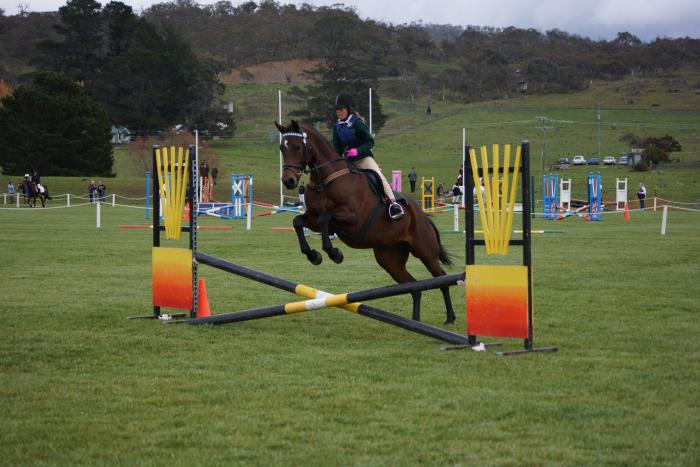 jumper/eventer/alrounder