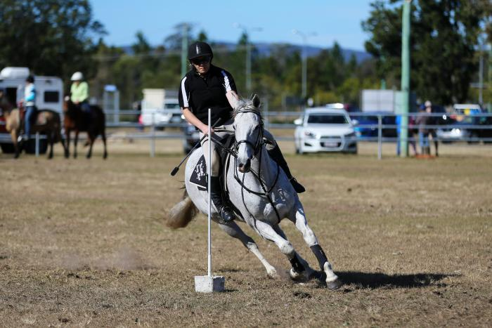Champion Competition / Sporting Mare