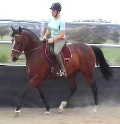 Elegant Arab/WB mare