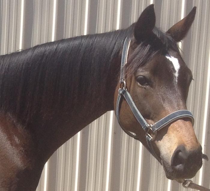 Guaranteed palomino or buckskin foals