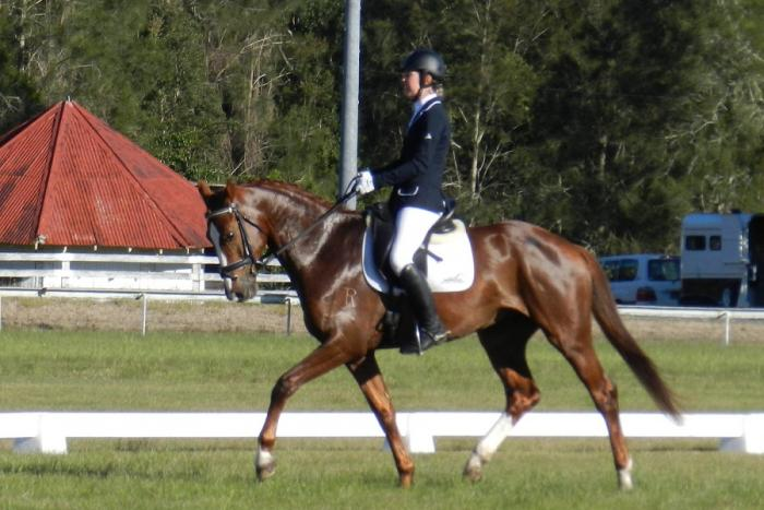 Lot 13 AOS Frederico R Outstanding Dressage star