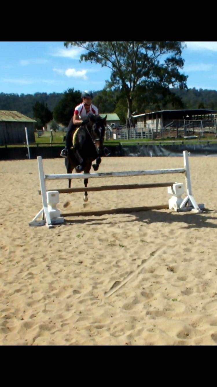 4yr TB Mare- Quiet & Super Jump