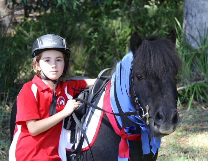 Perfect First Pony for Show and Fun