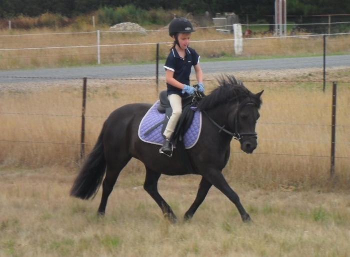 Competitive Beginners Pony
