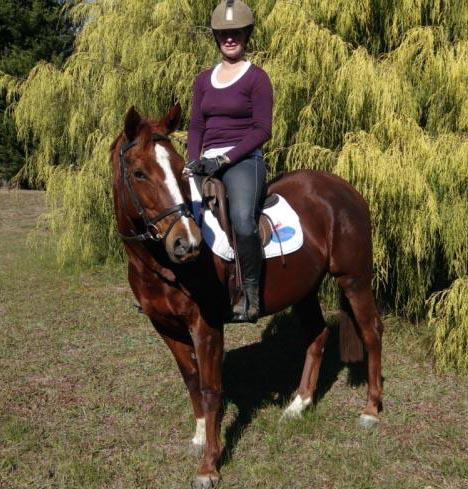 Liver Chestnut Mare 11 years old 14.2""