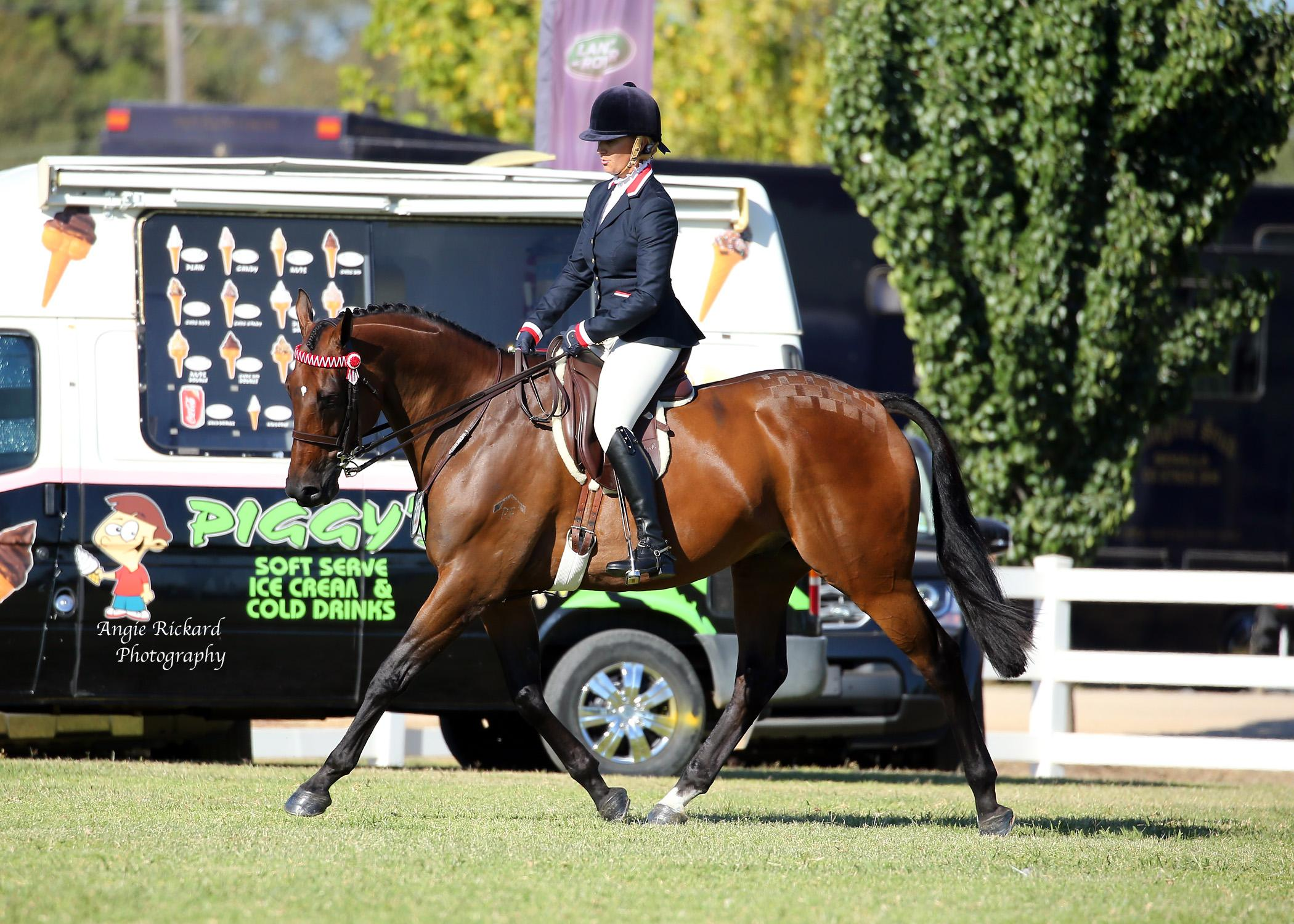 **PRICE REDUCED** Quality Large Hack with Fabulous Temperament
