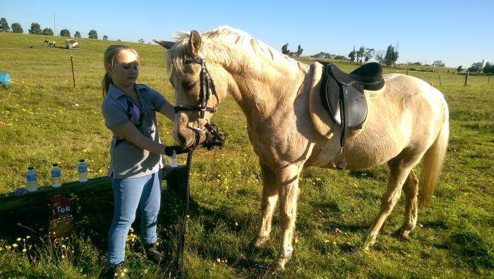 Spirit  fabulous trail pony