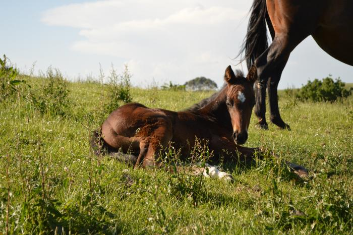 Broodmare with Ima Smooth Blue Cat colt at foot