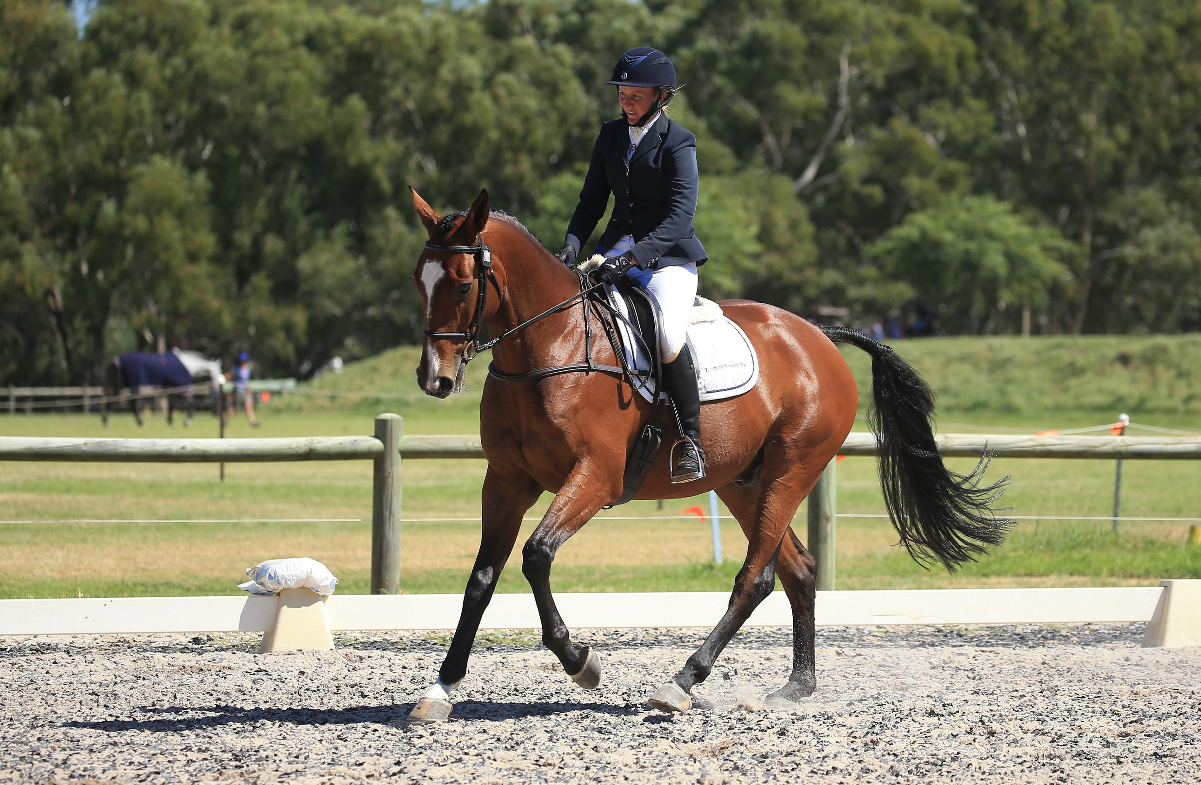 Experienced purpose bred performance horse