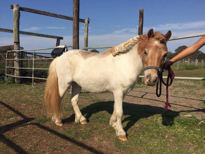 Kids leadline pony