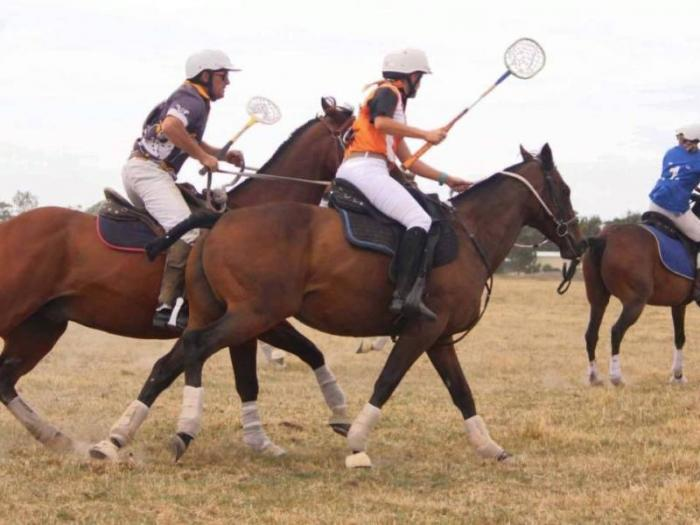 Thoroughbred mare (polocrosse, adult riders)